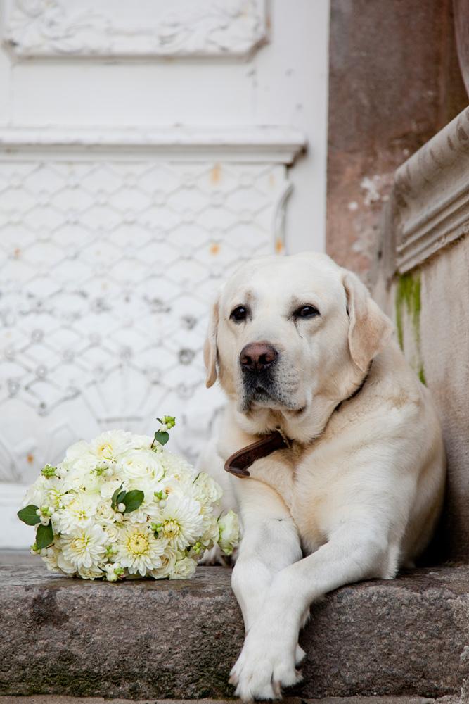 Hochzeiten Hund